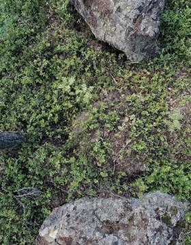 Grönska och stenblock