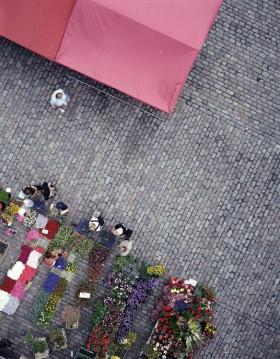 Stenbelagt torg med blomsterstånd
