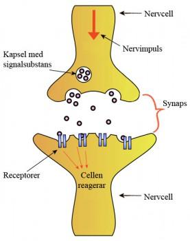 vad är noradrenalin