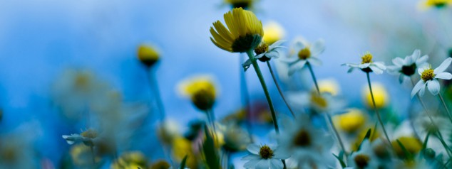 Kopia av summer-flowers-wallpaper-2560x1600-