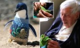 Alfie Date, den 109-åriga australiensaren, stickar tröjor till pingviner som har berörts av oljespill.